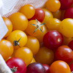 pomidory venus