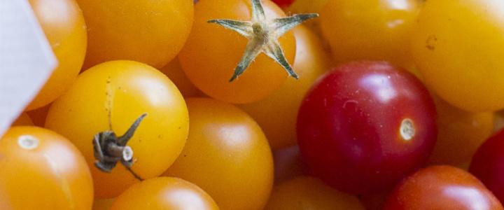 Mini pomidorki Venus