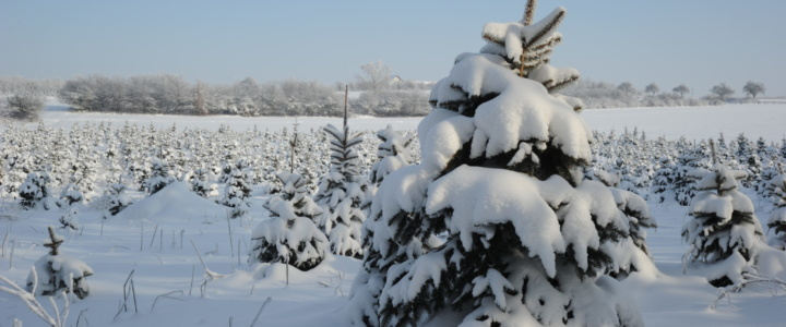 Zima, trudny czas dla ogrodnika