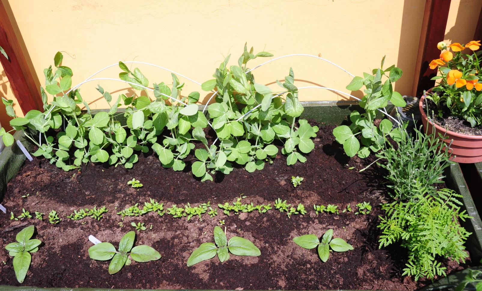 współrzędna uprawa warzyw