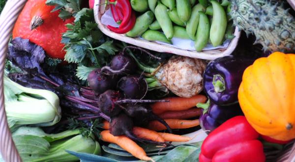 warzywa balkonowe