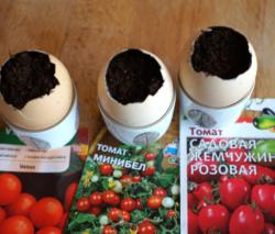 Siew Pomidorów W Skorupkach Jaj