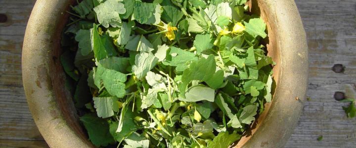Wywary, gnojówki, wyciągi – naturalne nawożenie i ochrona roślin cz.1