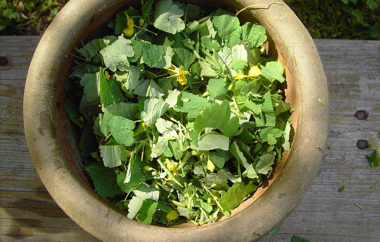 naturalne nawożenie i ochrona roślin