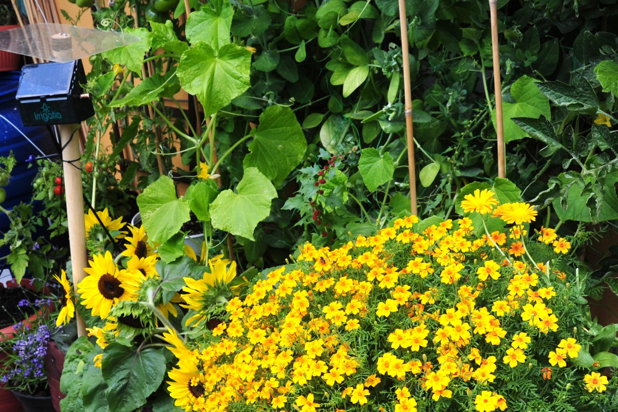 uprawa współrzędna w skrzyniach