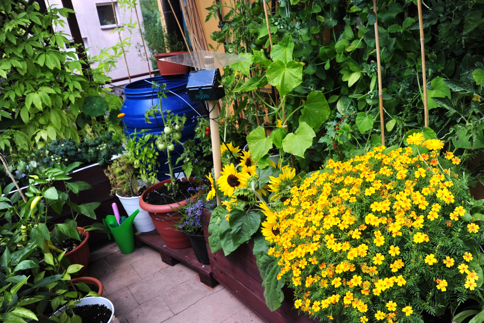 balkonowy warzywnik- nawadnianie