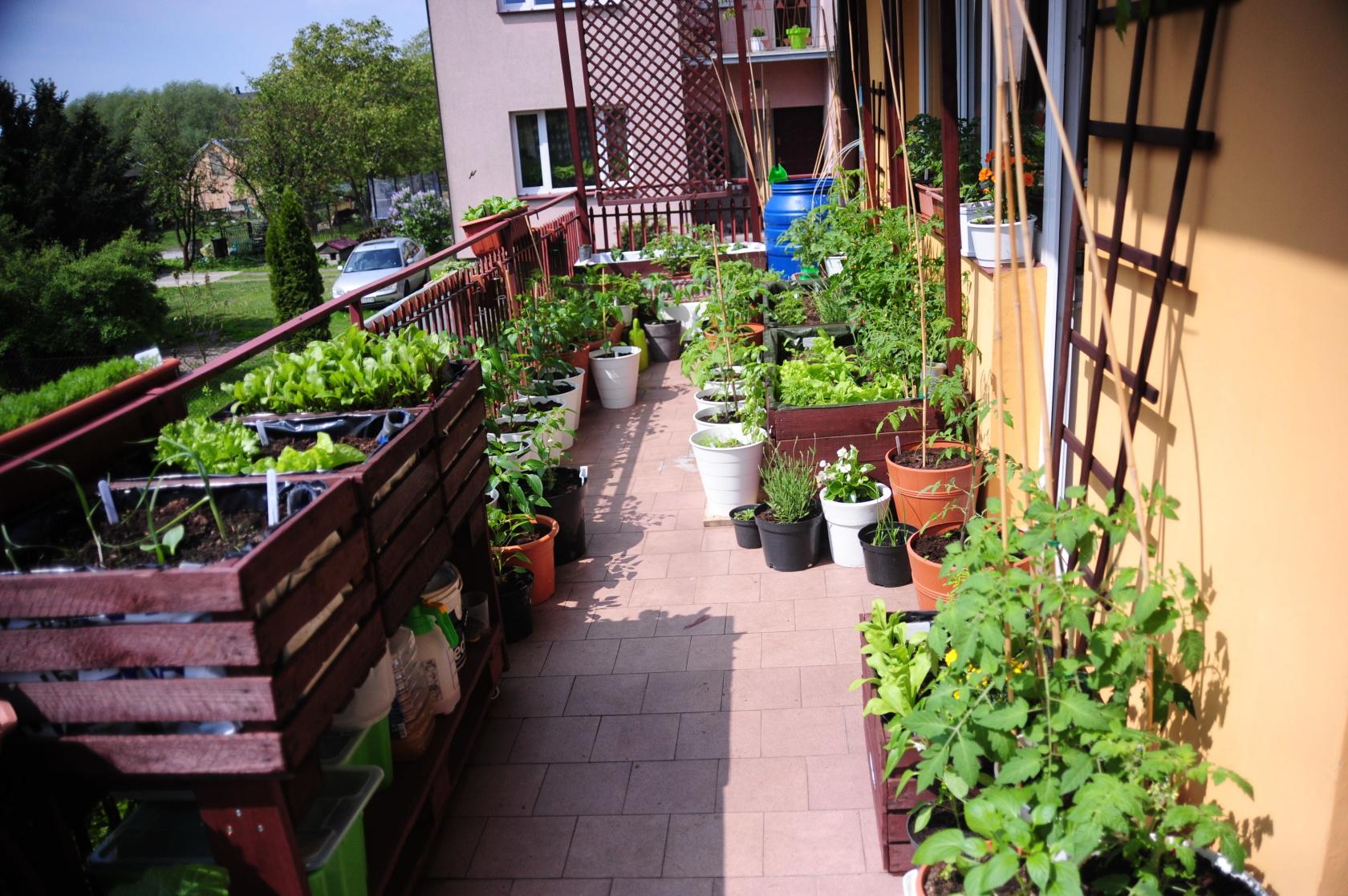 balkonowywarzywnik wiosną