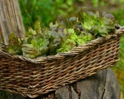 Salad-1516689_1920
