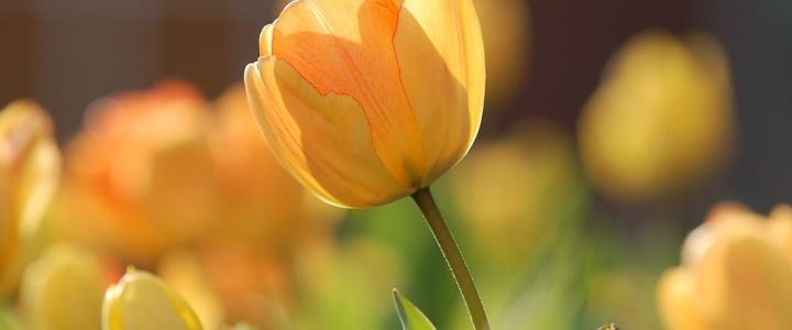 Wiosna, wiosna, wiosna ach to ty…