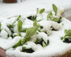 Bób W Śniegu