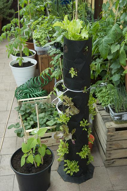 tuba z roślinami