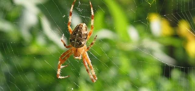 """""""Pająk chwat wszystkich brat""""- pająki ogrodowi pomocnicy"""