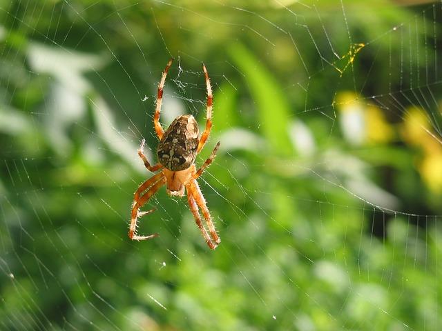pająk w ogrodzie