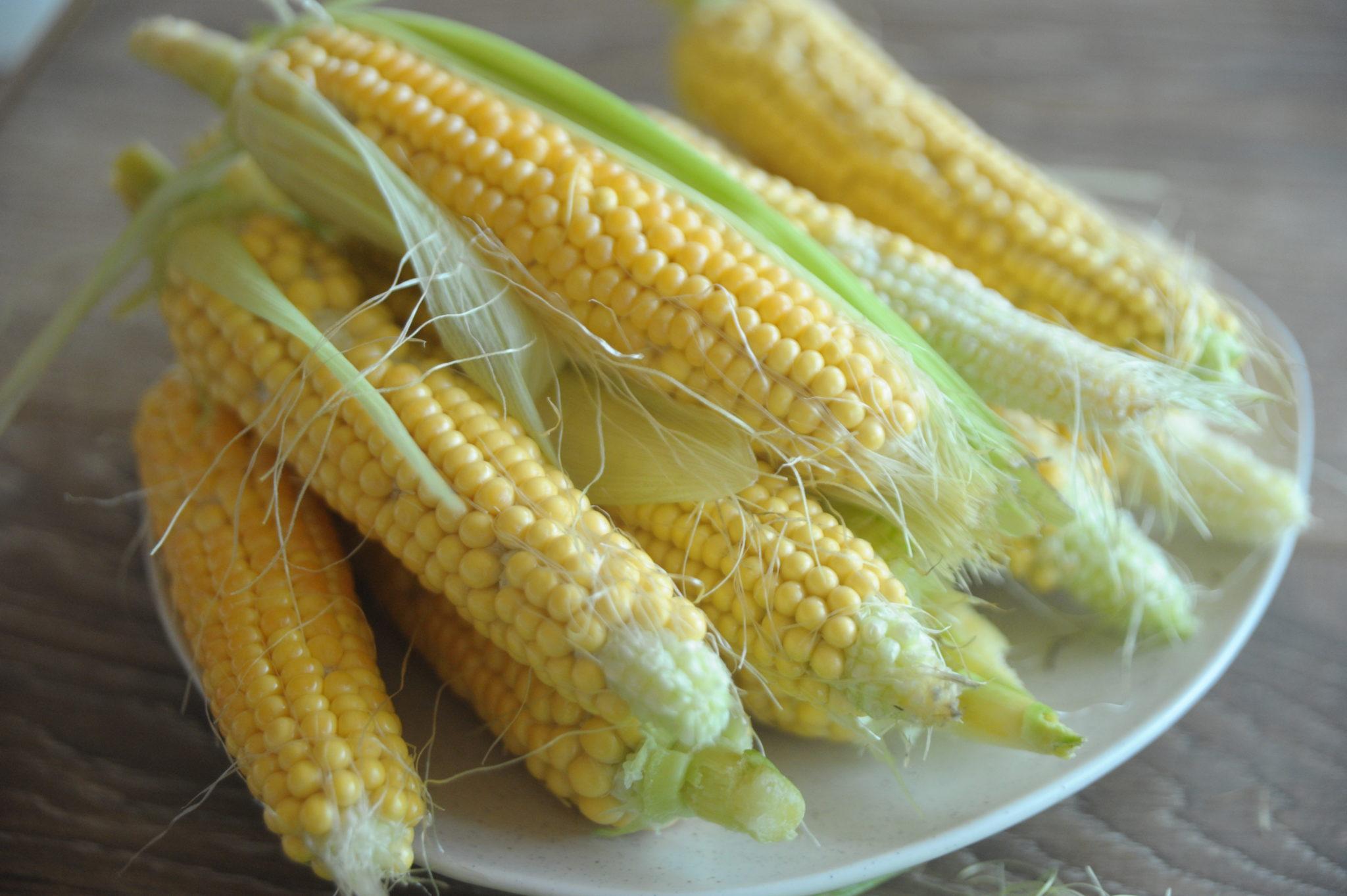 kukurydza w donicach