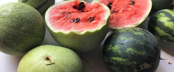 Balkonowe arbuzy – uprawa arbuzów w  pojemnikach.