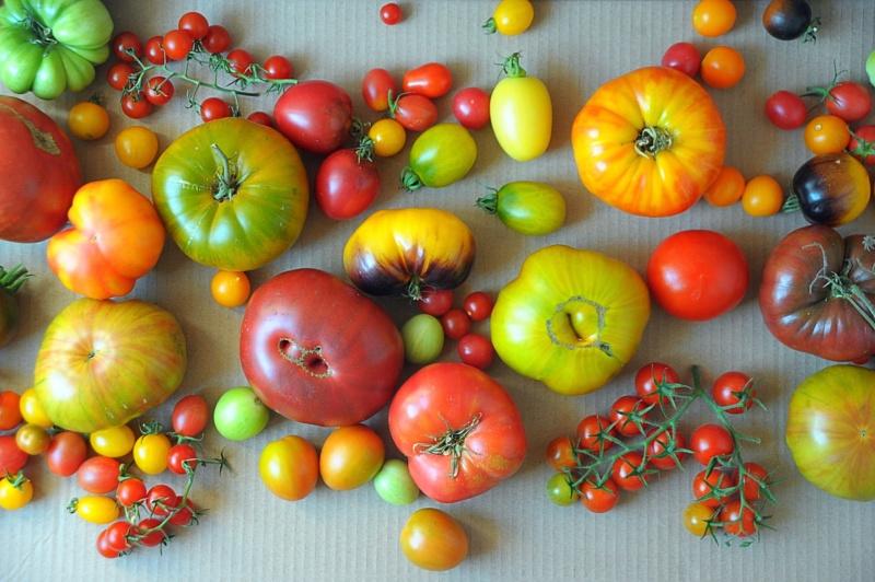 Jesienne pomidory