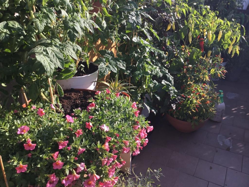 balkonowy warzywnik we wrześniu