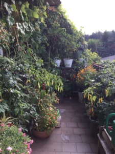 balkonowy warzywnik jesień 2017