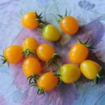 Pomidor Cytrynek Groniasty