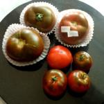 pomidor RAF