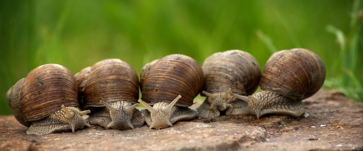 Ślimak ślimak wystaw rogi dam ci otręby żytnie
