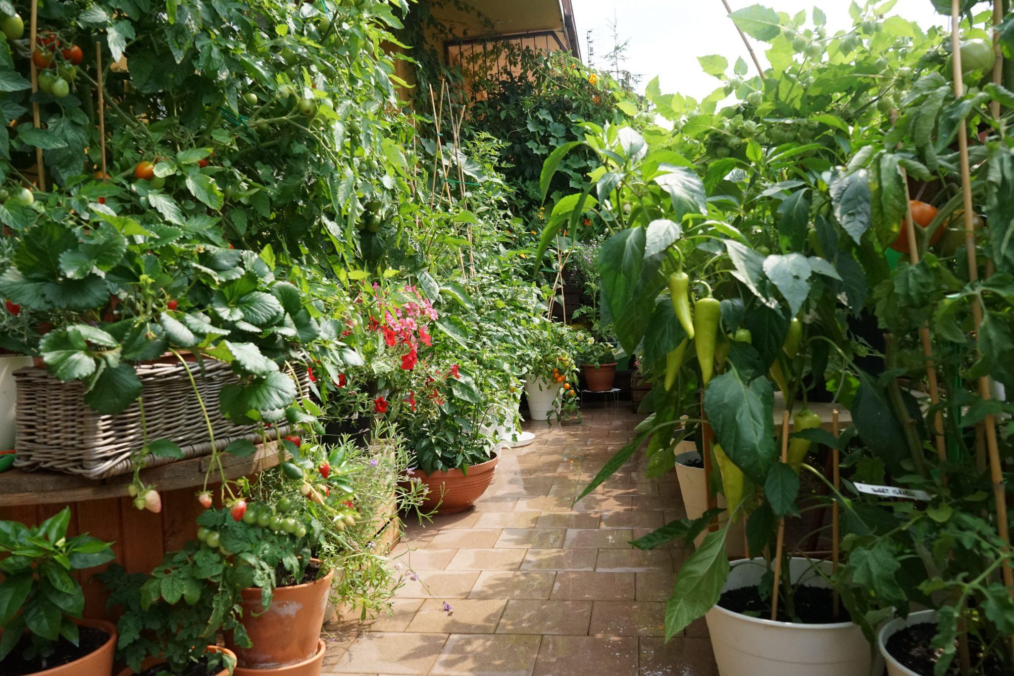 balkonowy warzywnik