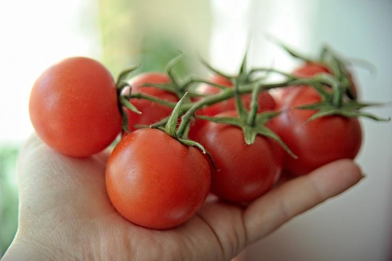 domowy nawóz do pomidorów