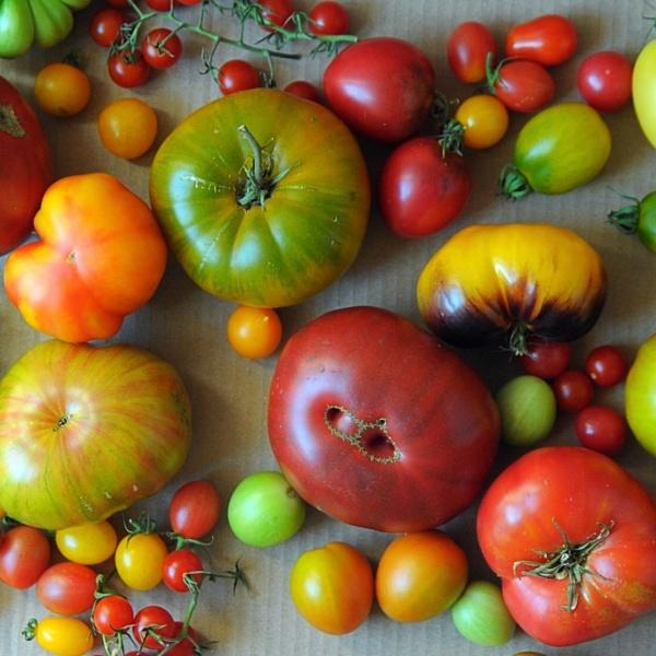 Pomidory cd...