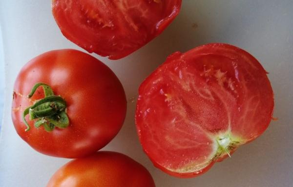 Pomidor Koperkowy