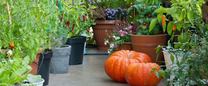 balkonowy warzywnik jesienią