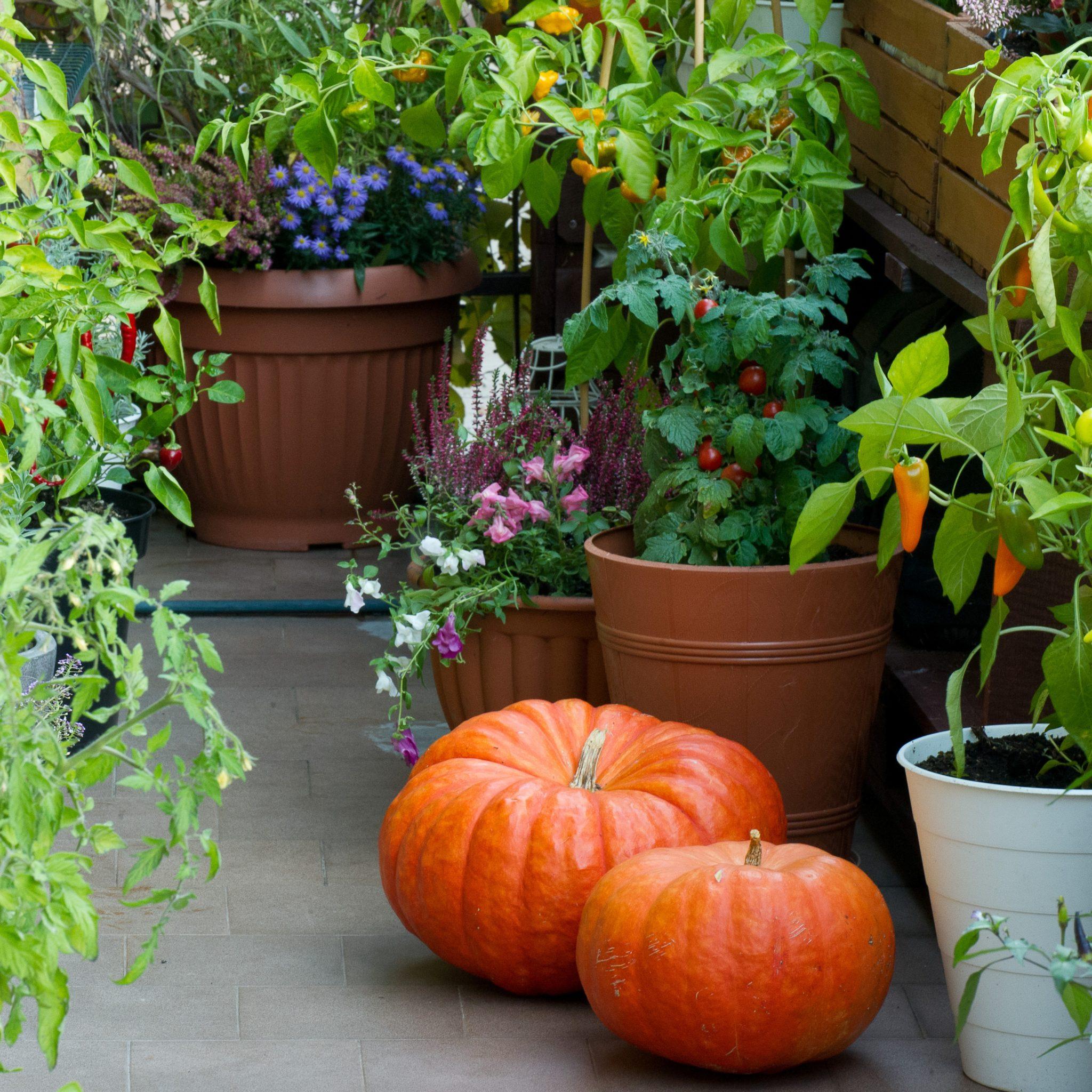 Zrzutka na hosting dla balkonowego warzywnika