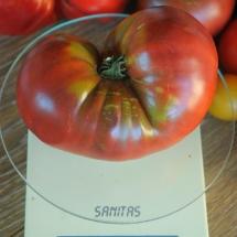 pomidor Black Sea Man