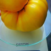 pomidor Yellow Sean's Dwarf