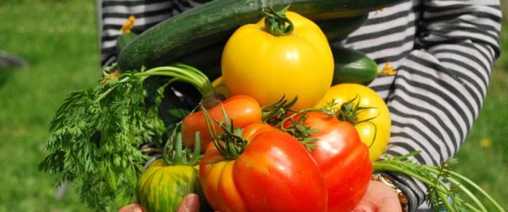warzywa z balkonu