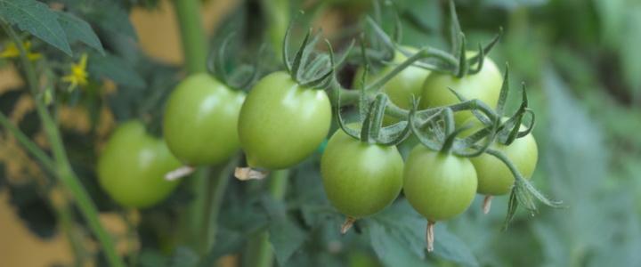 Lipcowy spacer po balkonowym warzywniku