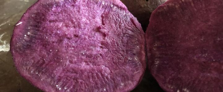 uprawa fioletowych batatów