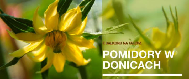 Uprawa pomidorów w donicach- mini poradnik cz.1